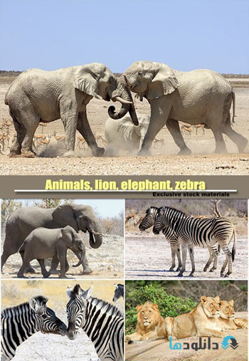 Animals,-lion,-elephant,-ze
