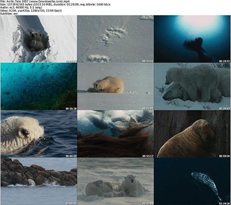 Arctic.Tale.2007 %28www.Downloadha.com%29 s دانلود مستند افسانه قطب شمال Arctic Tale 2007
