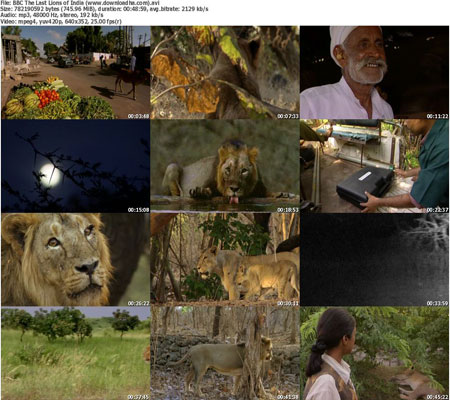 BBC The Last Lions of India دانلود فیلم مستند آخرین شیر های هند   2006 The Last Lions Of India