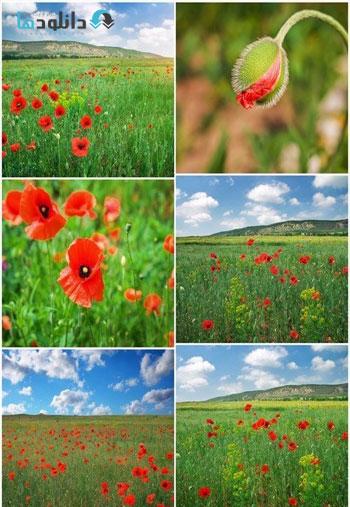Beautiful-Landscape-Field