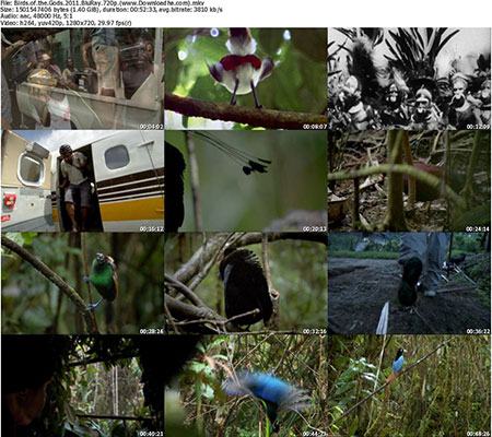 Birds.of.the.Gods.2011.BluRay.720p دانلود مستند پرندگان خدایان Birds of the Gods 2011
