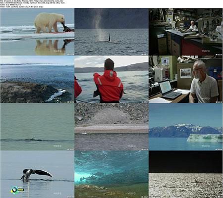 Invasion.of.the.Killer.Whales.HDTV.720p %28www.Downloadha.com%29 s  دانلود مستند Invasion of the Killer Whales 2014