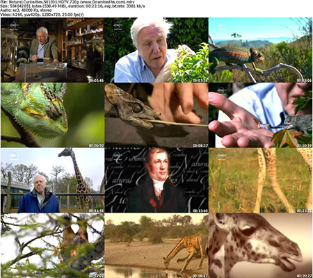 Natural.Curiosities.S01E01.HDTV.720p %28www.Downloadha دانلود فصل اول  مستند Natural Curiosities 2013
