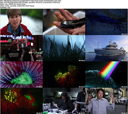 PBS.NOVA.Creatures.of.Light.HDTV 720p DLHA %28www.Downloadha.com%29 s دانلود مستند PBS Nova Creatures of Light 2016