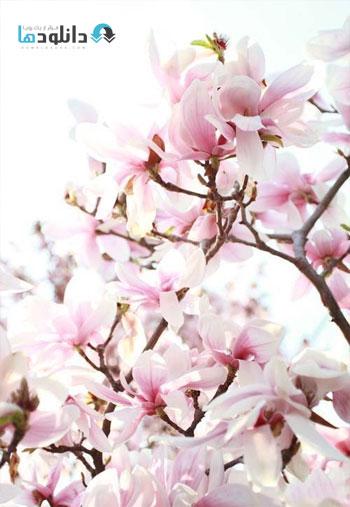Spring-blossom-trees
