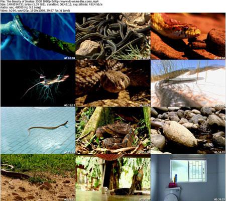 The Beauty of Snakes 2008 1  دانلود مستند زیبایی مارها   2003 The Beauty Of Snakes