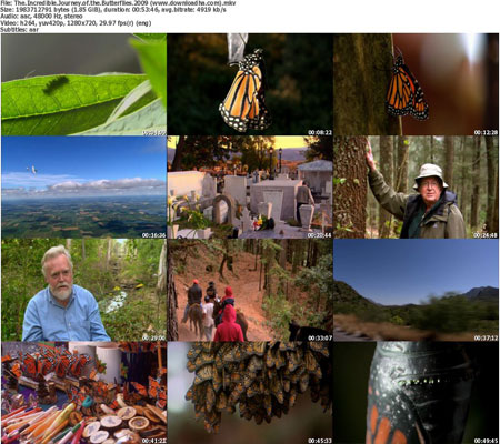 The.Incredible.Journey.of.t  دانلود مستند سفر اعجاب انگیز پروانه ها   2009 The Incredible Journey of the Butterflies