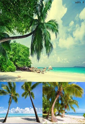 Tropical-Islands-Set-13