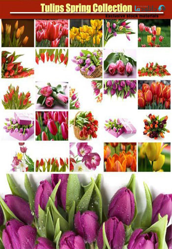 Tulips-Spring-Collection