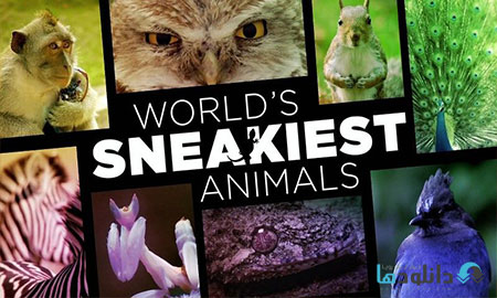 World s Sneakiest Animals  دانلود مستند BBC Worlds Sneakiest Animals 2016
