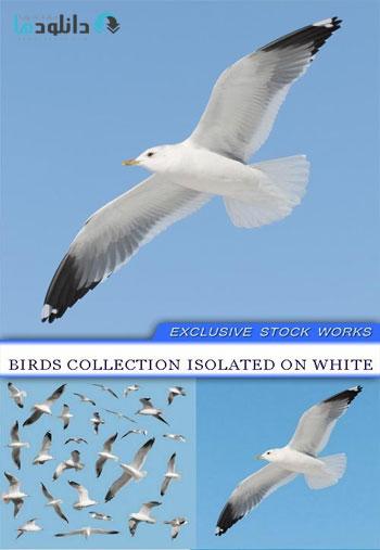 birds-collection