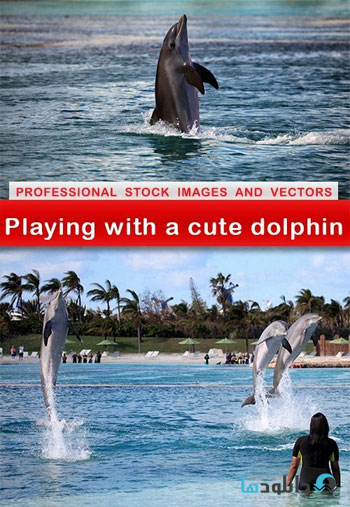 playing-with-cute-dolphin