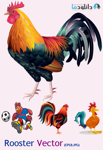 rooster vector دانلود ۲۵ وکتور خروس – Rooster Vector