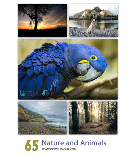 Nature and Animal %28Downloadha.com%29 دانلود مجموعه 65 والپیپر طبیعت و حیوانات Nature and Animals