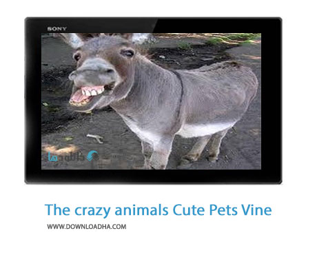 The crazy animals Cute Pets Vine compilation 2014 Cover%28Downloadha.com%29 دانلود کلیپ حیوانات خانگی شگفت انگیز