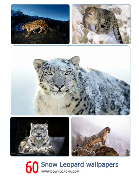 60-Snow-Leopard-wallpapers-Cover