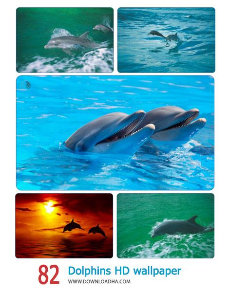 دانلود مجموعه ۸۲ والپیپر با کیفیت عالی از دلفین ها
