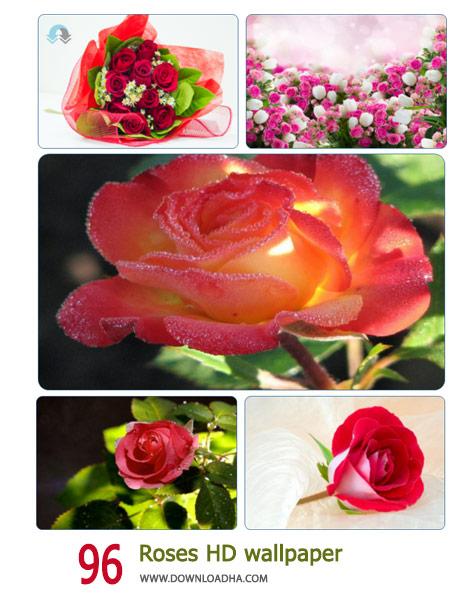 دانلود مجموعه ۹۶ والپیپر از گل رز با کیفیت HD