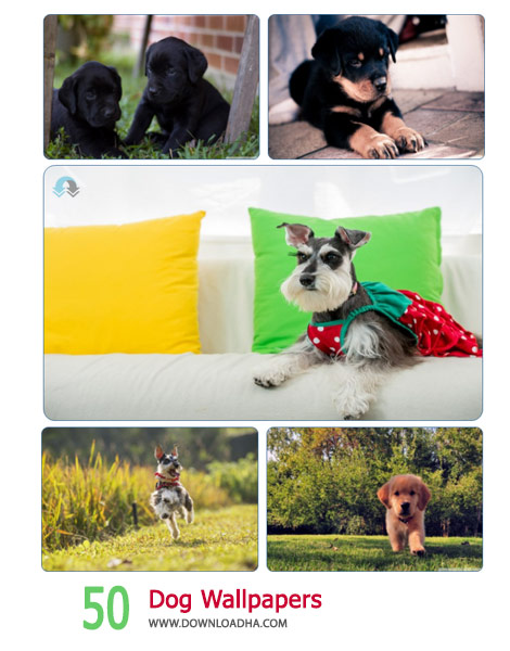 50 Dog Wallpapers Cover%28Downloadha.com%29 دانلود مجموعه 50 والپیپر از سگ