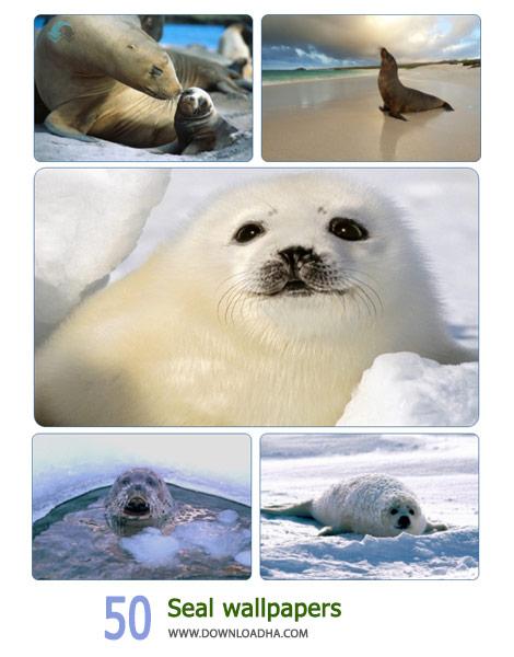 50 Seal Wallpaper Cover%28Downoadha.com%29 دانلود مجموعه 50 والپیپر از خوک های آبی