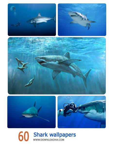 60 Shark wallpapers Cover%28Downloadha.com%29 دانلود مجموعه 60 والپیپر از کوسه ها