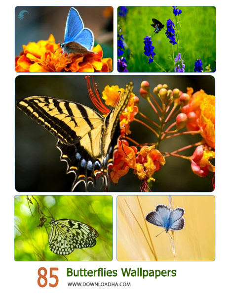 85 Butterflies Wallpapers Cover%28Downloadha.com%29 دانلود مجموعه 85 والپیپر پروانه های زیبا