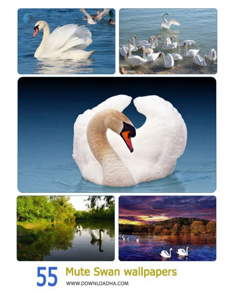 55 Mute Swan wallpapers Cover%28Downloadha.com%29 دانلود مجموعه 55 والپیپر قو