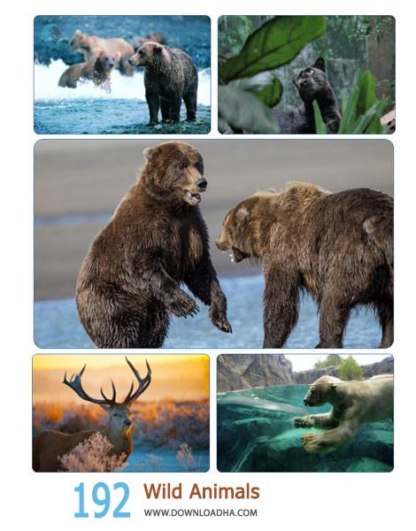 192 Wild Animals Cover%28Downloadha.com%29 دانلود مجموعه 192 والپیپر حیوانات وحشی