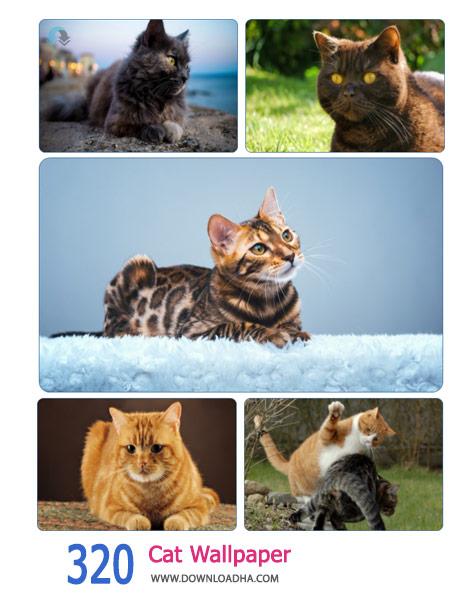 320-Cat-Wallpaper-Cover