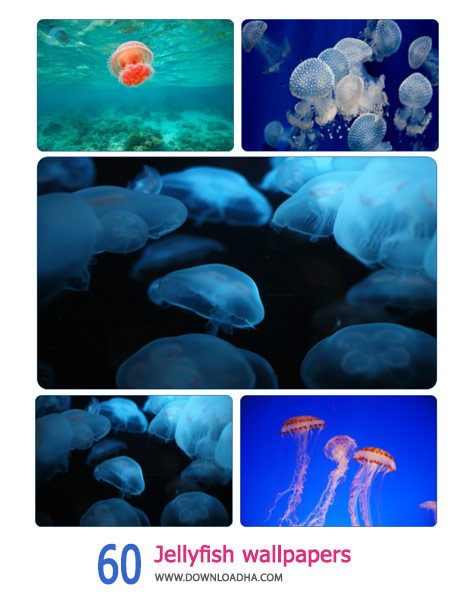 60 Jellyfish wallpapers Cover%28Downloadha.com%29 دانلود مجموعه 60 والپیپر عروس دریایی