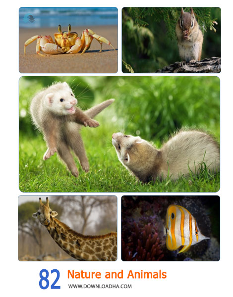 Collection of Animals Wallpapers Part 1