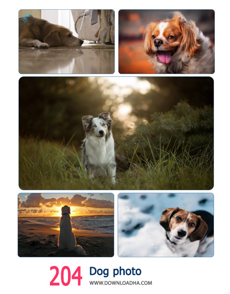 204-Dog-photo-Cover