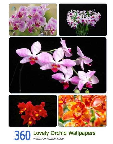360 Lovely Orchid Wallpapers Cover%28Downloadha.com%29 دانلود مجموعه 360 والپيپر گل اركيد