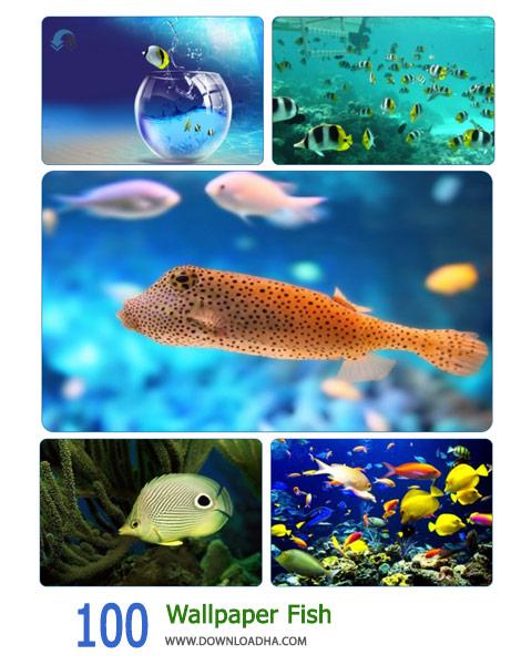 100-Wallpaper-Fish-Cover