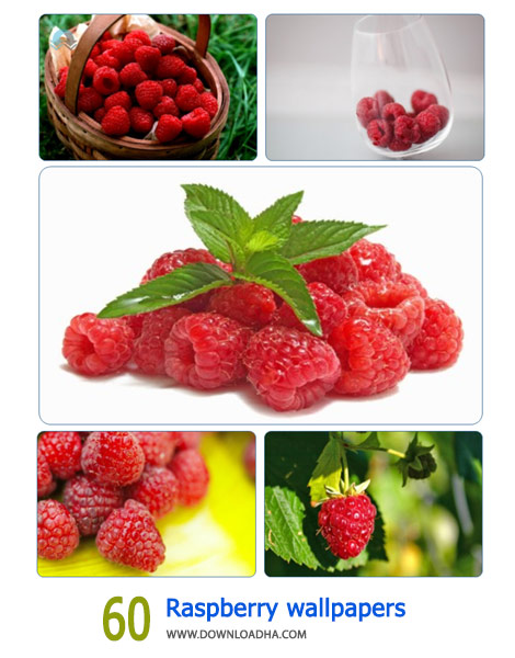 60-Raspberry-wallpapers-Cover