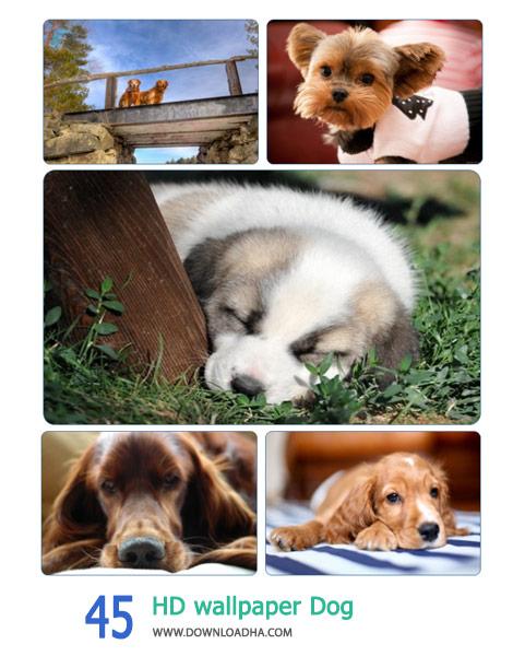 45-HD-wallpaper-Dog