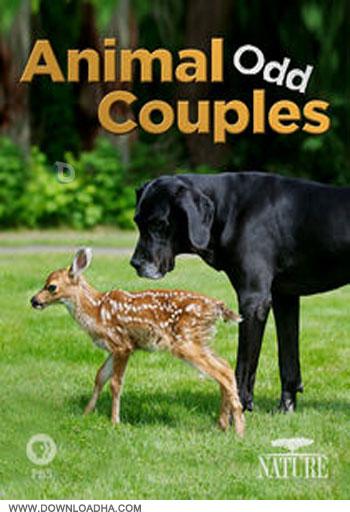Animal Odd Couples دانلود مستند جفت های عجیب حیوانات Animal Odd Couples