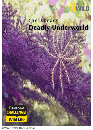 دانلود مستند Wild: Caribbeans Deadly Underworld 2014