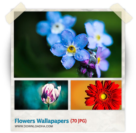 Flowers HQ Wallpapers مجموعه 70 والپیپر با کیفیت از گل ها Flowers HQ Wallpapers
