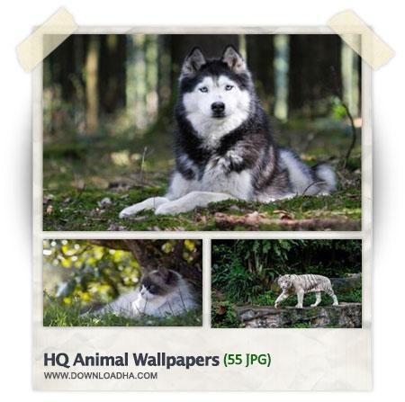 HQ Wallpapers Animal مجموعه 55 والپیپر با موضوع حیوانات HQ Animal Wallpapers