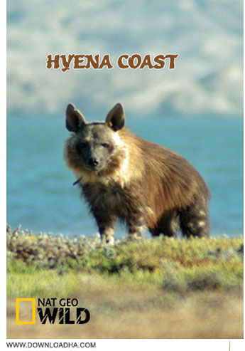 Hyena Coast دانلود مستند کفتار ساحلی Hyena Coast 2014