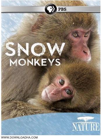 Snow Monkeys دانلود مستند میمون های برفی Nature: Snow Monkeys 2014