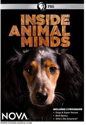 دانلود مستند باهوش ترین حیوان Inside Animal Minds: Who's the Smartest? 2014