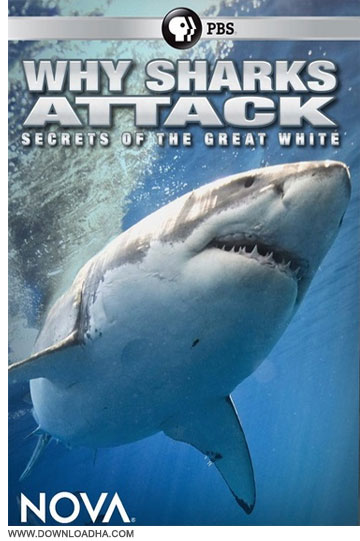 Why Sharks Attack دانلود مستند NOVA: Why Sharks Attack 2014