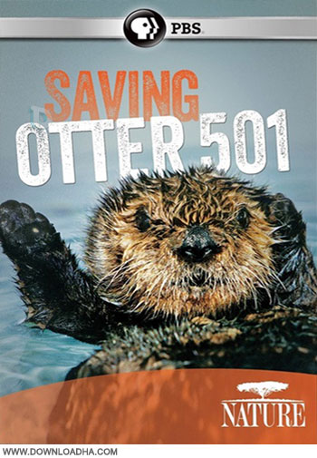 PBS   Nature   Saving Otter 501 دانلود مستند PBS   Nature: Saving Otter 501