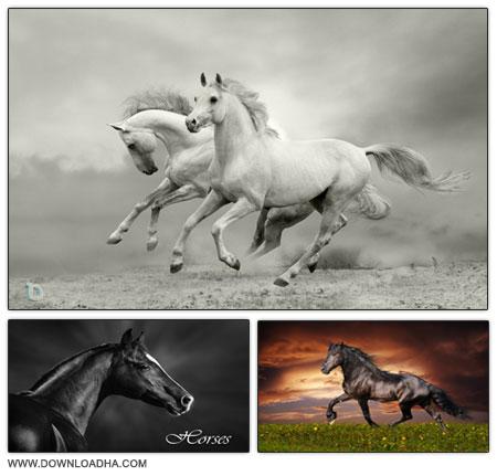 Beautiful Horses مجموعه ۵ تصویر استوک با موضوع اسب ها Beautiful Horses