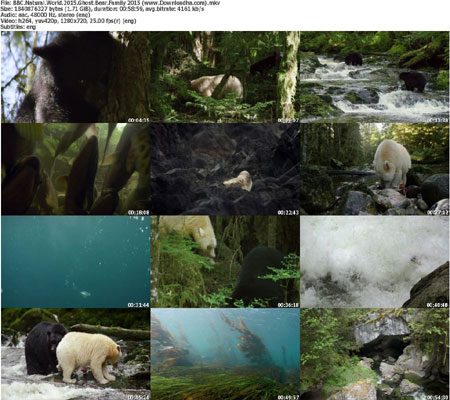 BBC.Natural.World.2015.Ghos دانلود مستند BBC Natural World – Ghost Bear Family 2015
