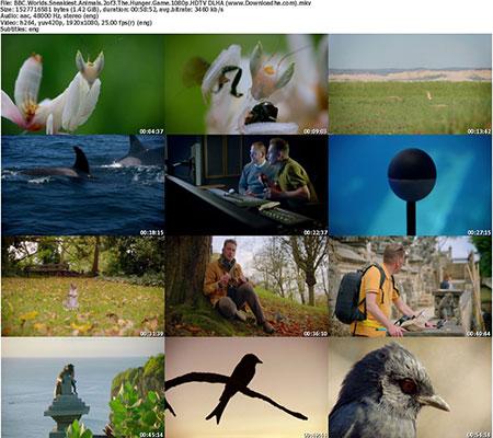 https://img5.downloadha.com/AliGh/IMG/BBC.Worlds.Sneakiest.Animals.2of3.The.Hunger.Game.1080p.HDTV-DLHA-(www.Downloadha.com)_s.jpg