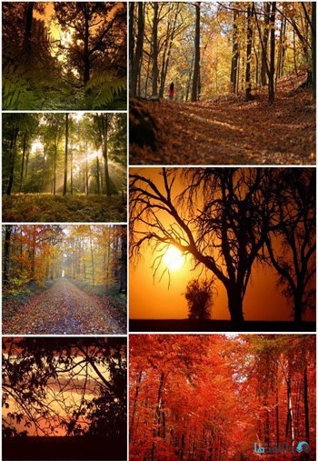 Beautiful-autumn-forest