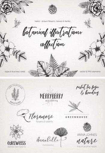 Botanical-Illustrations